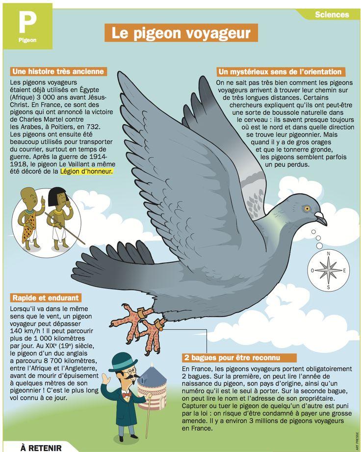 Fiche exposés : Le pigeon voyageur