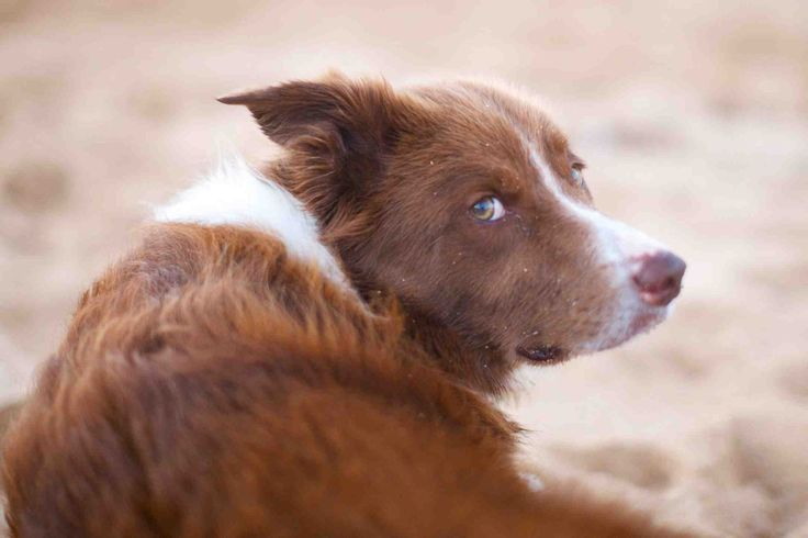 Best Treatment For Eye Infection In Dogs