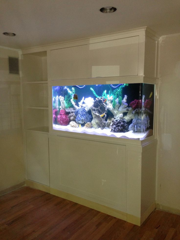 built in fish tanks joy studio design gallery best design