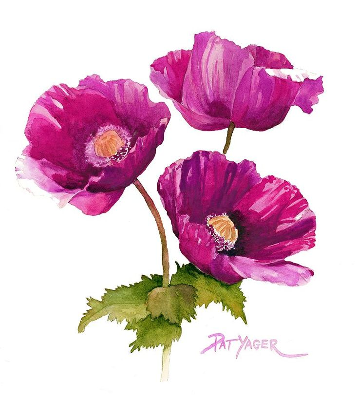 Poppies Painting - Purple Poppies by Pat Yager