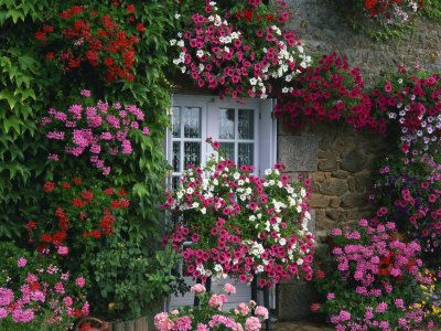 Farmhouse Window Surrounded by Flowers, Ille-et-Vilaine, Brittany, France, Europe Photographic Print (geraniums and petunias)