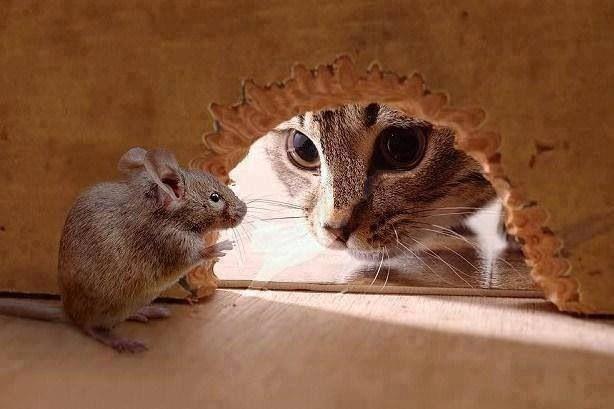 El gato y el ratón Tomy y jerry