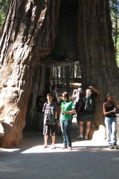 The Giant Sequoia National Monument