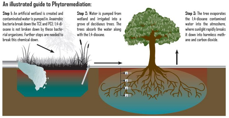 PHYTOREMEDIATION: describes the treatment of environmental problems (bioremediation) through the use of plants that mitigate the environmental problem without the need to excavate the contaminant material and dispose of it elsewhere. Phytoremediation consists of mitigating pollutant concentrations in contaminated soils, water, or air, with plants able to contain, degrade, or eliminate metals, pesticides, solvents, explosives, crude oil and its derivatives.