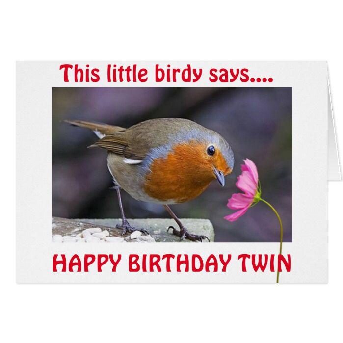 TWIN BIRTHDAY WISHES FROM THIS LITTLE BIRDY