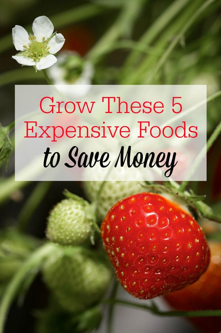 Want to save money by gardening? Start growing these 5 expensive foods to get more bang for your buck!