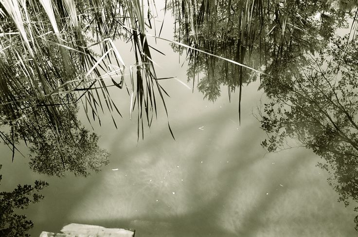 Original Photograph by Rick Nickles