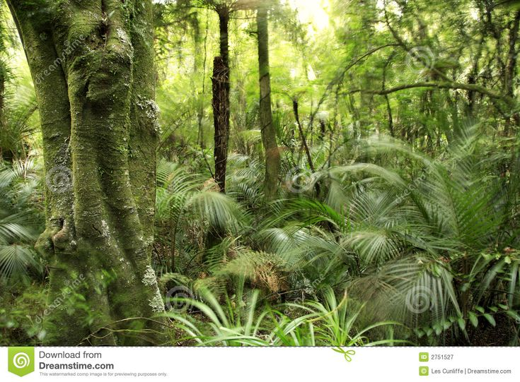 Tropical Forest Royalty Free Stock Photography - Image: 2751527