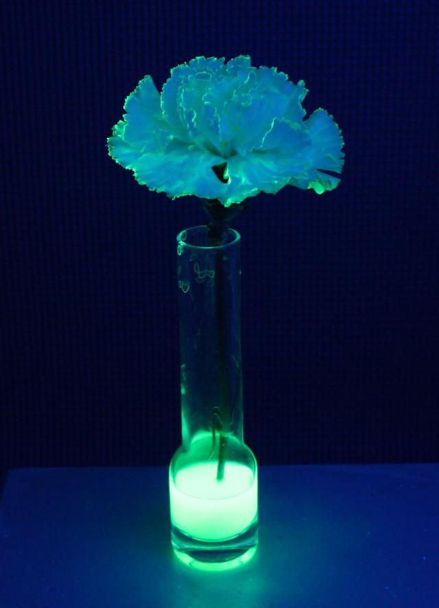 Make a Glowing Flower: Tonic water, which contains quinine, was used to impart a blue glow to this carnation.