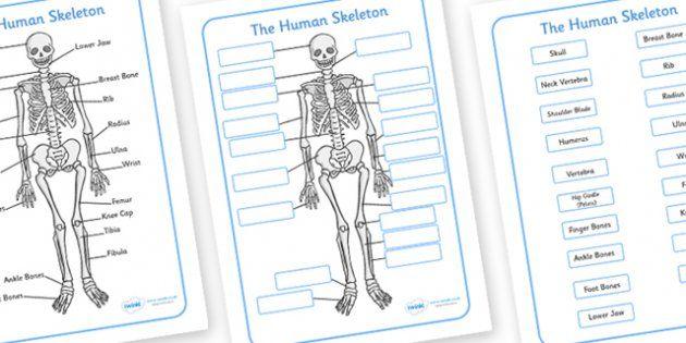 Human Skeleton Labelling Sheets - Free