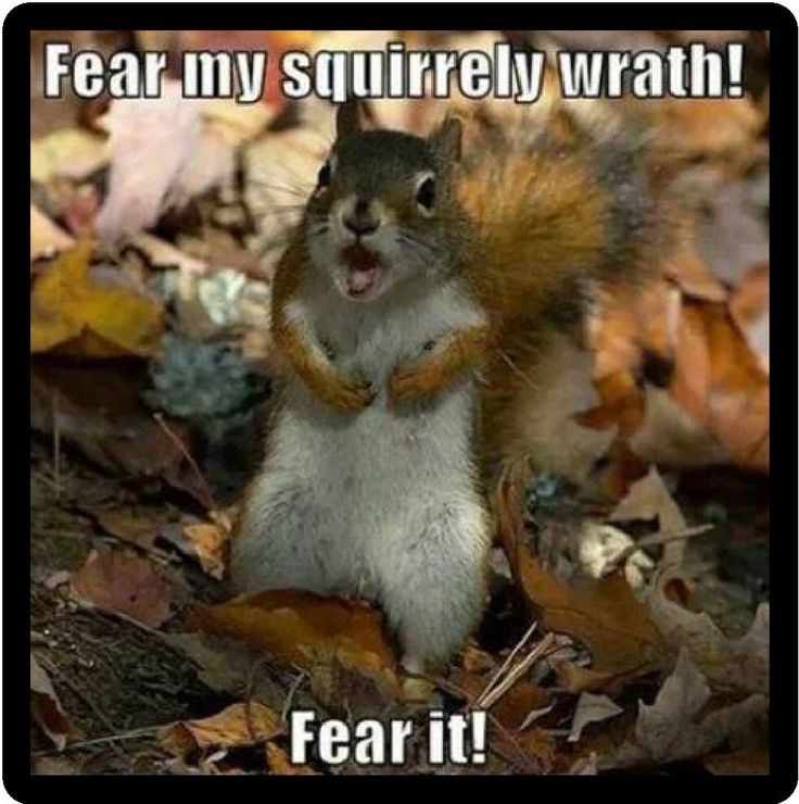 Funny Squirrel Humor Fear My Squirrely Wrath Refrigerator Magnet