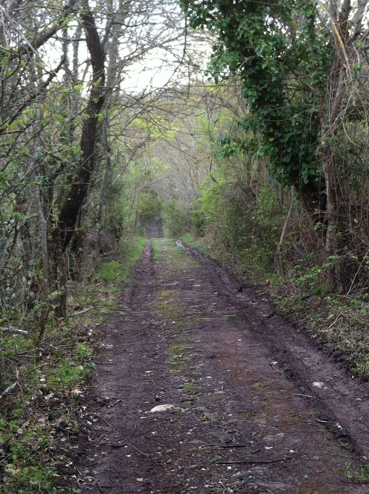 The path. Bosco del Sasseto #photowalkitaly
