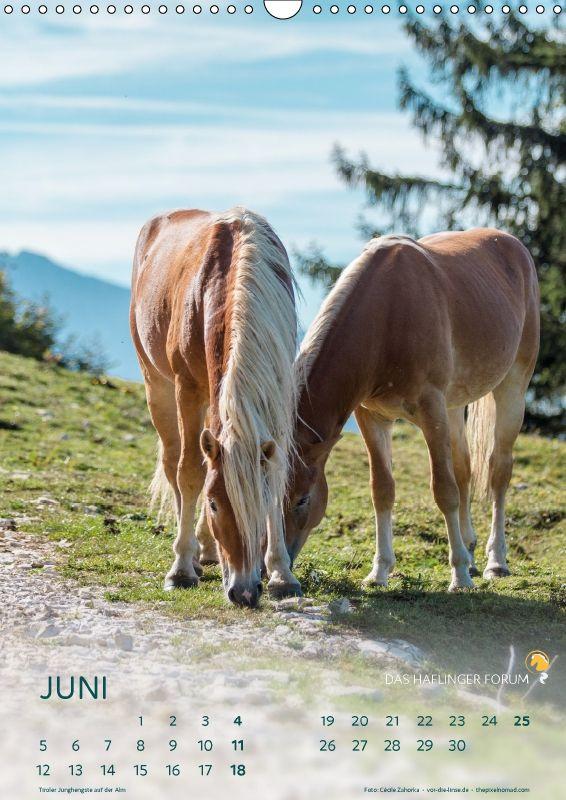 Haflinger Pferde 2017 - Das Haflinger Forum - CALVENDO
