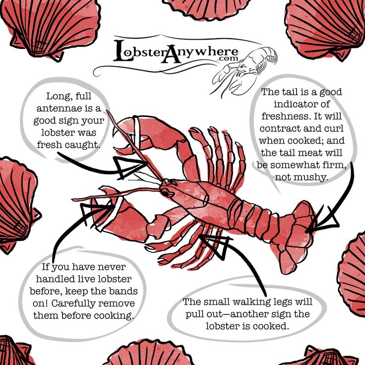 Buy live lobster online we sale live maine lobsters and