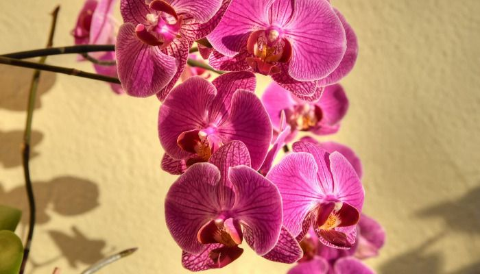 13 Lucky Plants And Flowers To Buy For Chinese New Year