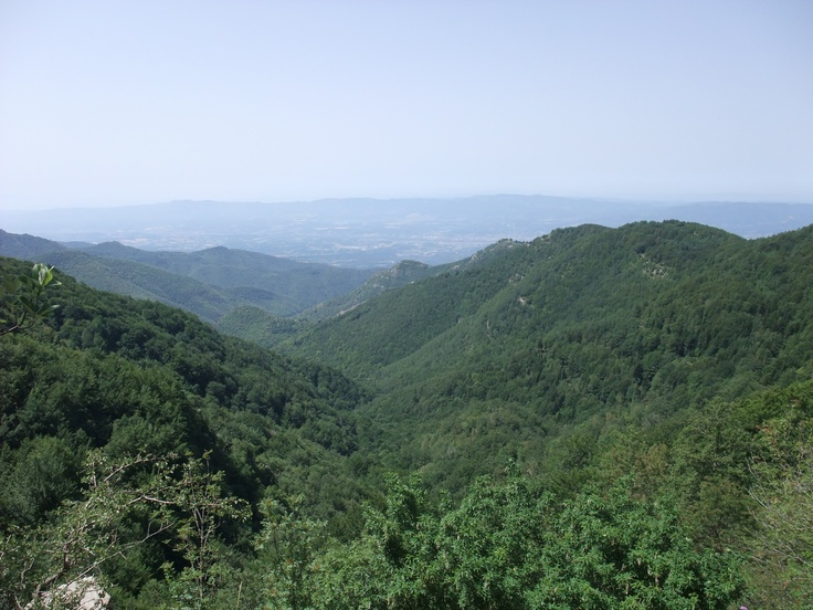 Toscana. Foresta di Sant Antonio