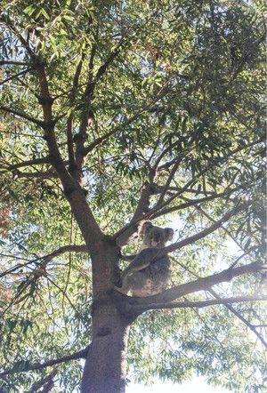 Chillin'. - Rockhampton Zoo, Zoos, Rockhampton, QLD, 4700 - TrueLocal