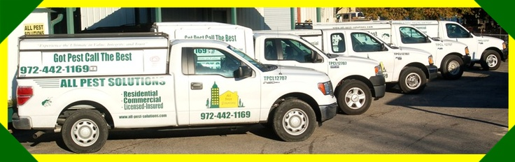 Pest Control Plano, Allen, Dallas, Wylie, TX | All Pest Solutions