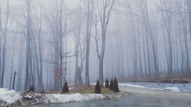 В горах красиво в любую погоду! Но в такую холодно :-) #природа #вгорах #лес #гора #туман #мгла #Болгария #България #Бузлуджа #Еделвайс