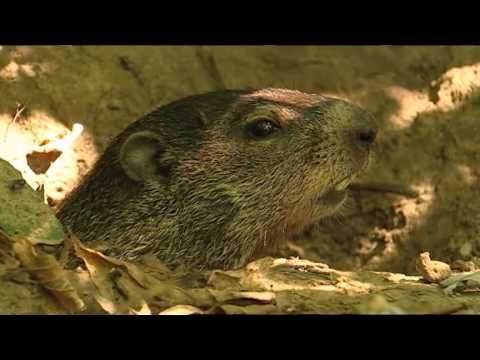 GROUNDHOG DAY  - facts about groudhogs -  kids love the bathroom part!