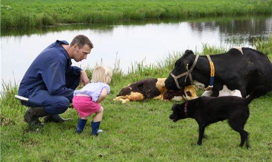 Samen met boer Wibe een koe van dichtbij bewonderen op FarmCamps 't Oortjeshek