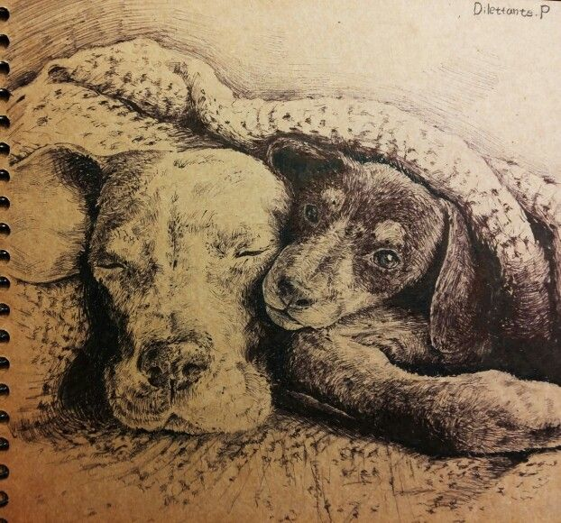 #draw #drawing #art #illustration #picture #dog #friendship