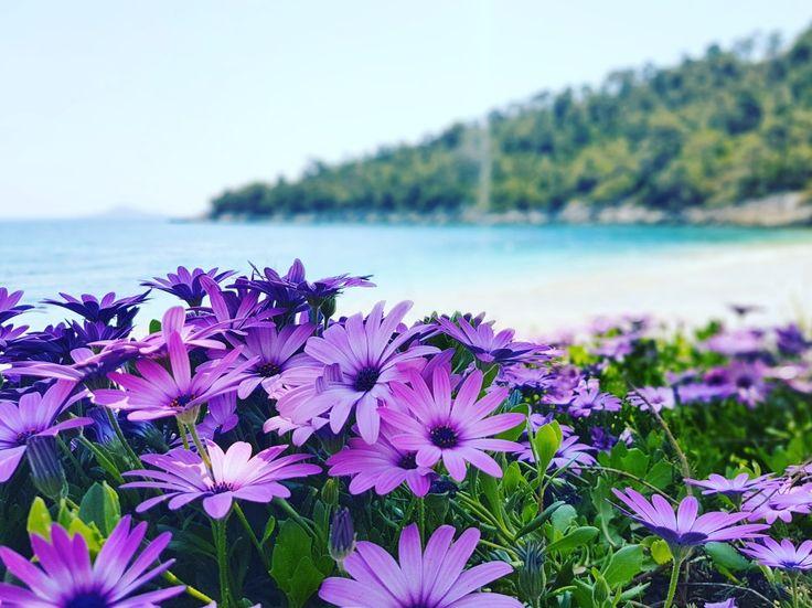 May is here...🌊🌸🌊🌸🌊 🌎 www.angelosalonissos.com #angelos_apartments #alonissos #sporades #greece #spring #may #beach #sun #sea #sky #flowers