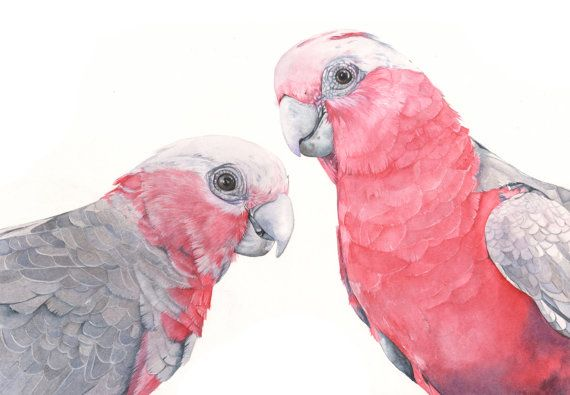 This listing is for an archival print of my original watercolor painting Tickled Pink  Paper Size: A3 29.7cm by 42cm 11.7 inches by 16.5 inches Paper is Landscape orientation It is printed with Epson Ultra Chrome pigment inks on 310gsm beautiful archival Fine Art Paper. Please note: Colors will vary slightly due to calibration differences in monitors.  Three sizes are available: https://www.etsy.com/shop/LouiseDeMasi/search?search_query=galah&order=date_desc&view_type=gallery&ref=shop_search…