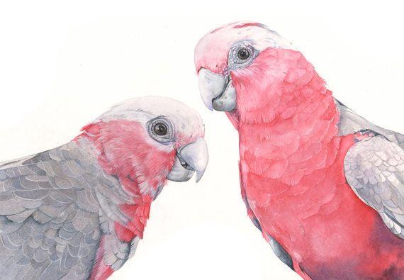 Galahs print of watercolor painting