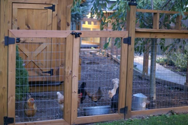 The 25 Best Welded Wire Fence Ideas On Pinterest Wire
