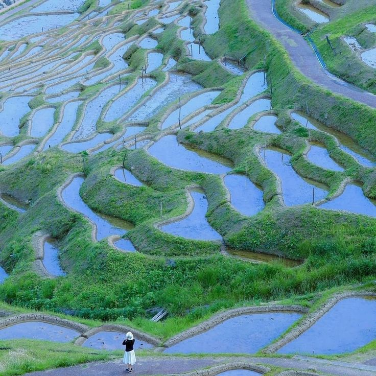 "1,633 Likes, 3 Comments - Japan Alert (@japanalert) on Instagram: ""Rice fields located in Ishikawa, Fukushima prefecture.  #Japan #JapaneseCulture #Ishikawa #rice…"""