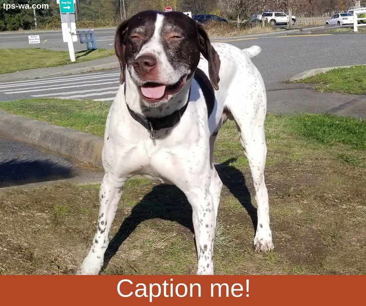 Feel free to help us find the best caption for this photo. #captionme #millcreek #tailoredpetservices #petsitting #doglife #bestwoof #lovedogs #dogwalking #lovepets #doglovers #dogsitters #dogwalk #washingtondogs #happydog #spoiledpets #happydogsclub #dogstagram #petstagram #instapet #instapup #instawoof #instadog #activedogsofinstagram #dogsofig #dogsofinstagram #petstagram #pupstagram #cutenessoverload