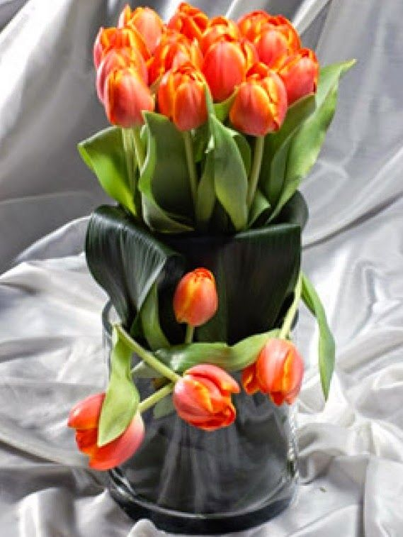 Ιδιαίτερα είναι και τα φύλλα της τουλίπας, το χρώμα των οποίων ποικίλει από πολύ λαμπερό στο λιγότερο λαμπερό, ενώ σε ορισμένες περιπτώσεις έχουν ορισμένα στίγματα με πιο βαθύ πράσινο χρώμα. Η τουλίπα έχει ύψος 20-40 εκ , αλλά υπάρχουν και ποικιλίες που το ύψος τους μπορεί να ξεπεράσει τα 70εκ που είναι η λεγόμενες French Tulips.