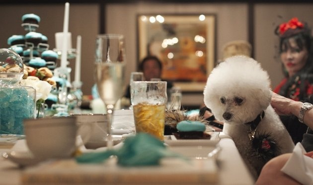 Bored with planning your imaginary wedding?  Plan a wedding for your dog, complete with bridal shower.  Zoe, the Bijon Frise of Harriette Rose Katz, attends the bridal shower of Lucky Diamond, a Maltese dog, in New YorkBridal Showers