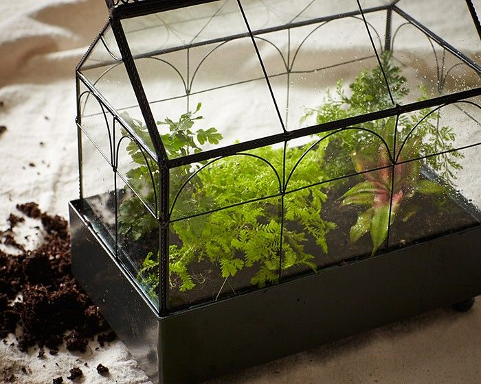 17 best images about green houses on pinterest geodesic for Indoor gardening glasses