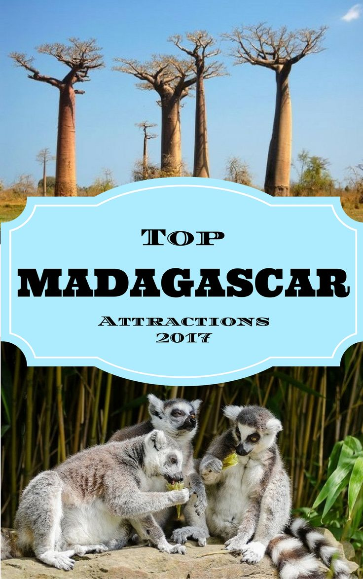 Top Madagascar Attractions 2017 Situated on the Southeast coast of Africa, Madagascar is a large island nation comprising a wide range of beaches, reefs, landscapes, plants, animals and rainforests. It is the fourth biggest island in the world and is home to many species of plants and animals that are endemic to the island and cannot be found anywhere else in the planet. #madagascar #follow #travel #tourism #amazing #love #megatraveltips