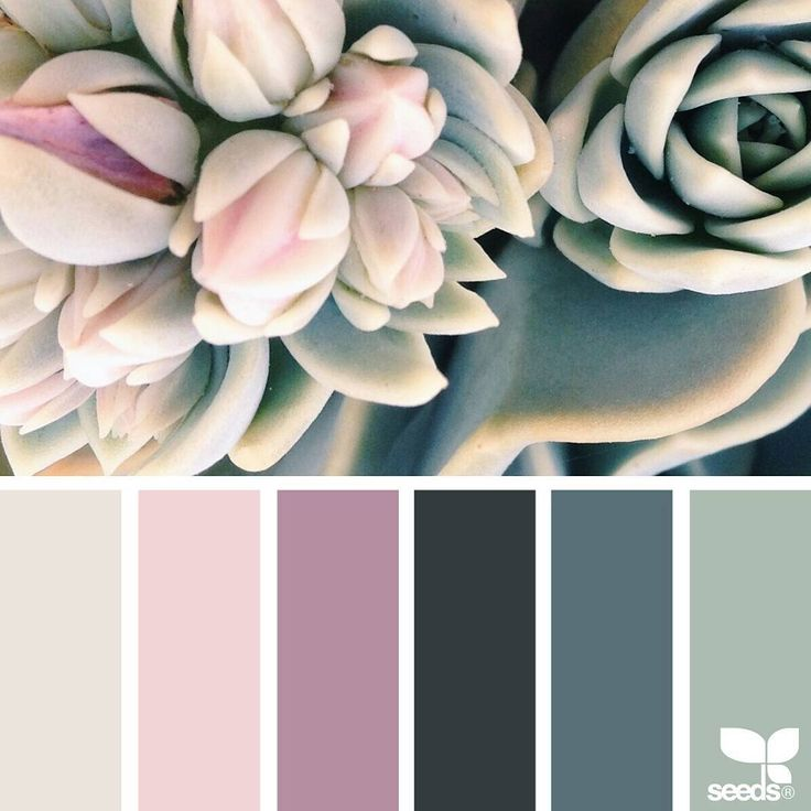 today's inspiration image for { succulent hues } is by @park_berlin ... thank you, Hanni, for sharing your wonderful photo in #SeedsColor !