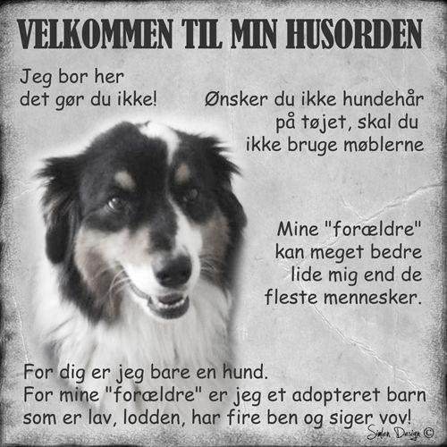 Velkommen-til-mine-husregler-dawn's-hund
