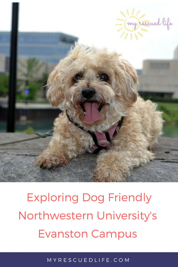 Enjoy a dog-friendly still on Northwestern U's Evanston