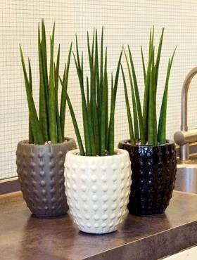 Kamerplanten staan mooi, maar zijn ook nog eens gezond. Waarom lees je in dit artikel