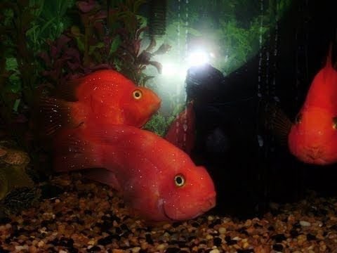 1000 images about pictures info on fish on pinterest for Ick in fish tank