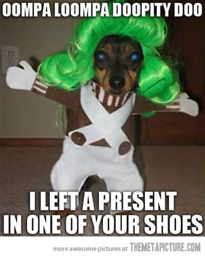 laughed so hard!: Laughing So Hard, Funny Dogs, Halloween Costumes, Dogs Costumes, Oompa Loompa, Funny Photo, So Funny, Dogs Funny, Oompaloompa