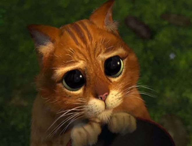 De par son aura si particulière, le chat a toujours inspiré les cinéastes. Une vidéo revient sur les chats au cinéma les plus marquants ! Découvrez-les ici ==> http://www.yummypets.com/fun/article/53590-zoom-sur-les-chats-au-cinema