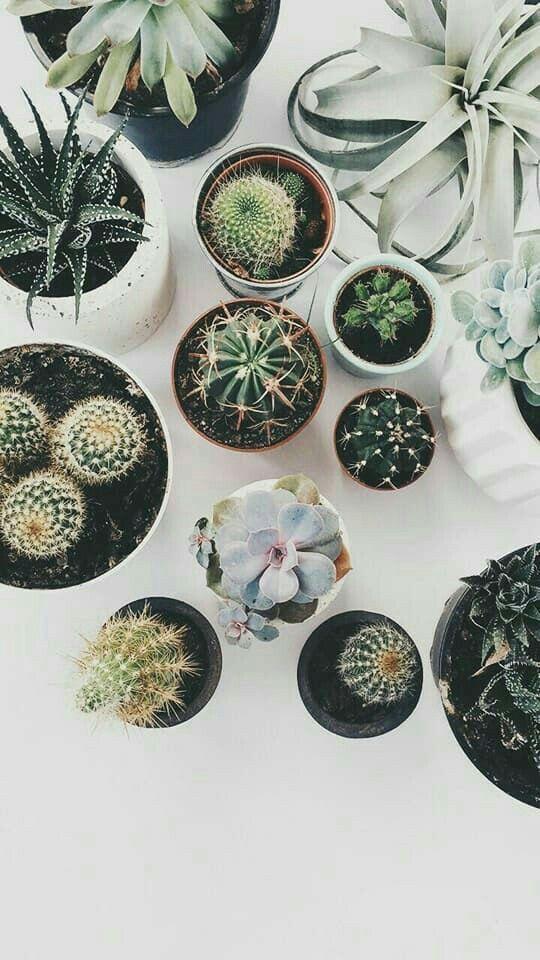 Botanical Beauty :: Plants :: Cacti :: Nature :: Palms :: Free your Wild :: Disc…