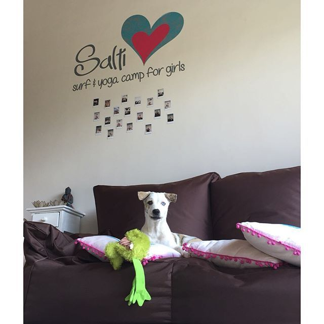 • Live the life of a Salti dog • Nothing but love here at Salti Hearts with our mascot Bowie! #LoveYoutotheMoonandBack #SaltiHeartsCantBeBroken #SaltiHearts #SurfandYogaCamp #Bali #LivetheLifeofaSaltiGirl #ParadiseLivin #SaltiTribe #SurfRetreat : info@saltihearts.com www.saltihearts.com || Photo by @deezlife