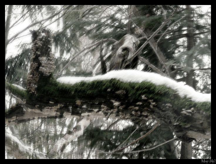 Ghost...via imaginalis...