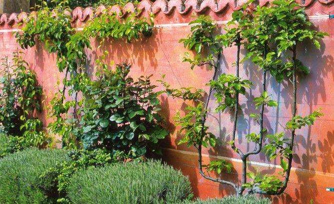 Les 382 meilleures images propos de j 39 ai descendu dans for Plante decorative exterieure