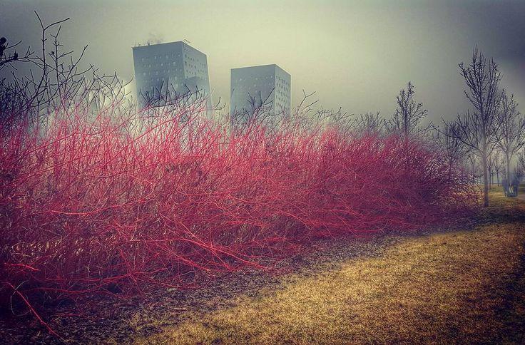 #morning #walking #fog #gray #rho #fieramilano #park #buildings #winter #cielo #sky #skyporn #milano #igersmilano #milanodavedere #milanocityofficial #lovelymilano #loves_milano #picsofmi #visitmilano #whywelovemilano #milanoaplacetoBe #milanostateofmind #igerslombardia #ig_lombardia #ig_milan #photooftheday #webstagram #shotoftheday #editoftheday by omaro80