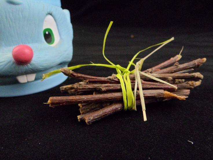 Wooden sticks for chinchilla - healthy chinchilla diet. Drewniane patyczki dla szynszyli - zdrowa dieta dla szynszyli. #chinchilla #Uszynszyla #szynszyle