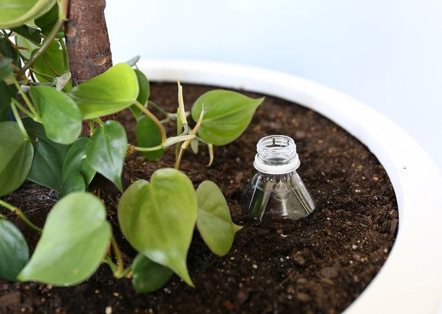 Poke holes in a plastic bottle and plant it mostly underground to create an in-soil drip waterer. | 14 Hacks To Really Up Your Gardening Game This Spring